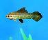 Cuidar de Peixes